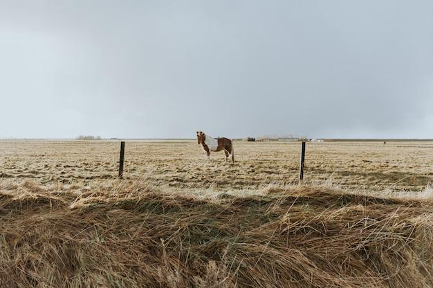 Schönes gewachsenes wildes pony, das in einem feld des getrockneten grases hinter einem drahtzaun steht