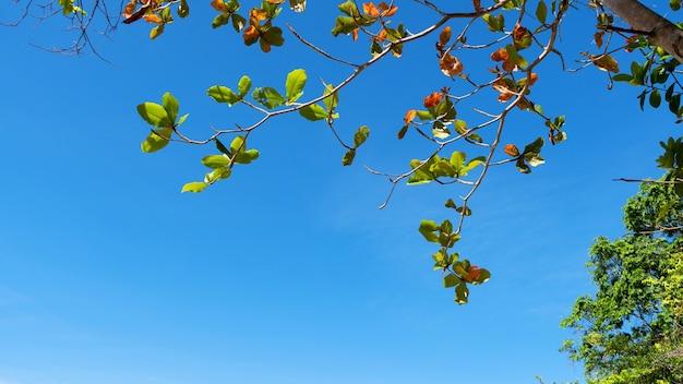 Schönes grün der bäume verzweigt sich rahmenblätter gegen klaren hintergrund des blauen himmels