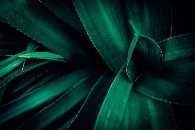 Schönes grün lässt hintergrund