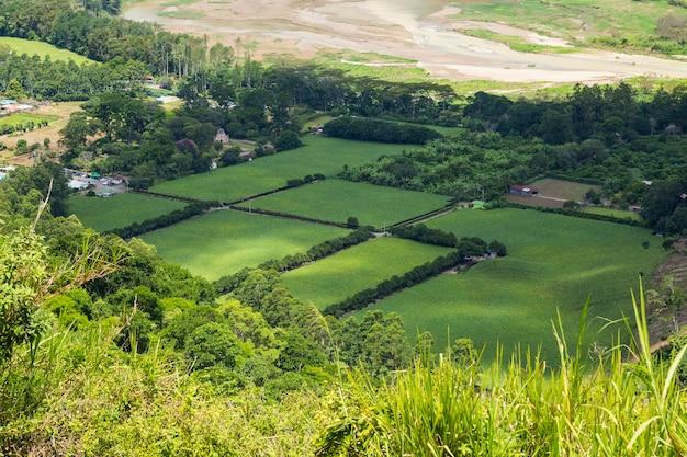 Schönes grünes feld der costaricanischen landschaft