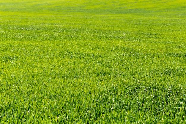 Schönes grünes feld
