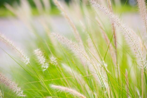 Schönes grünes gras für hintergrund.