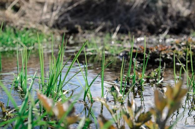Schönes grünes gras nahe dem nebenfluss.