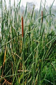 Schönes grünes gras, schilf im wasser. saisonales konzept - nebelhafter wilder sommermorgen. frühling. nebel vor dem hintergrund des sees. ländlicher kurzurlaub in der natur. artikel über den angeltag.