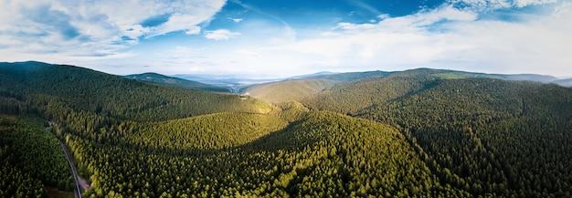 Schönes grünes kiefernwaldpanorama in rumänien-bergen mit blauem himmel