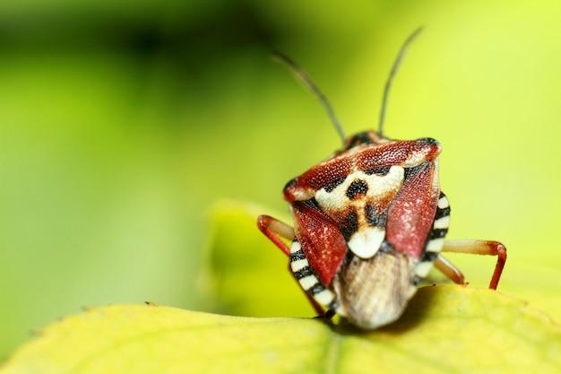 Schönes insekt auf einem saftigen grünen blatt