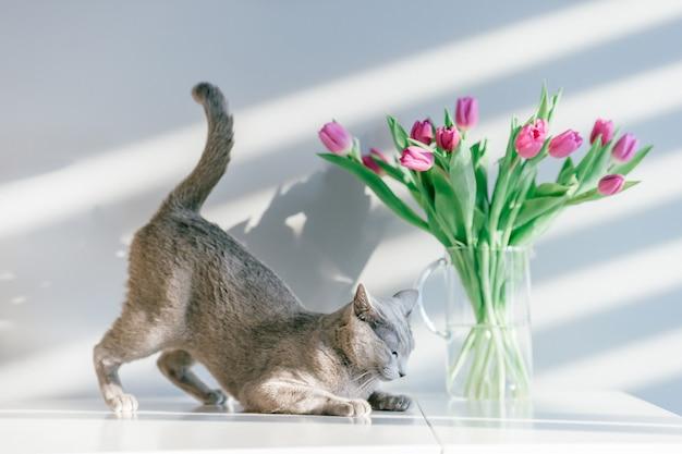 Schönes kätzchen, das mit blumen auf grauem hintergrund aufwirft