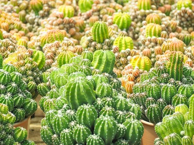 Schönes kaktusbild