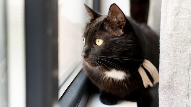 Schönes katzenportrait hautnah
