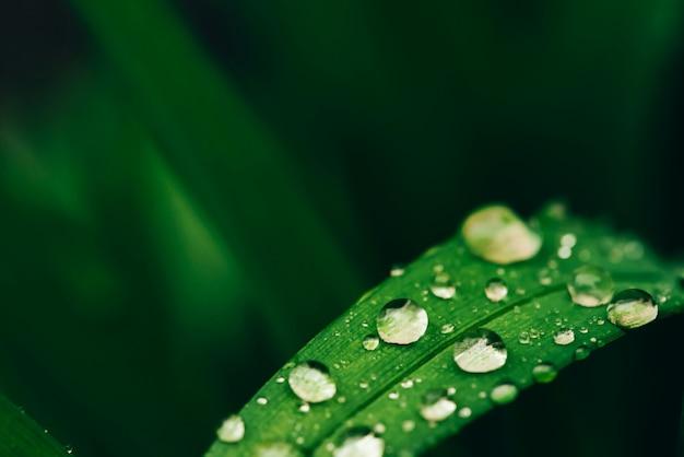 Schönes klares glänzendes grünes gras mit tautropfennahaufnahme mit kopienraum.