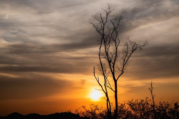 Schönes landschaftsbild mit schattenbild eines toten baums bei sonnenuntergang