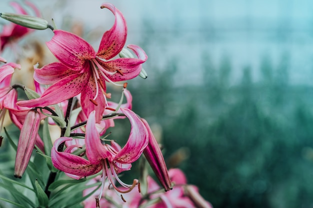 Schönes lilienfeld an einem sommertag
