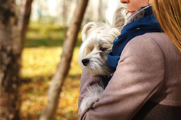 Schönes mädchen, das kleinen hund umarmt