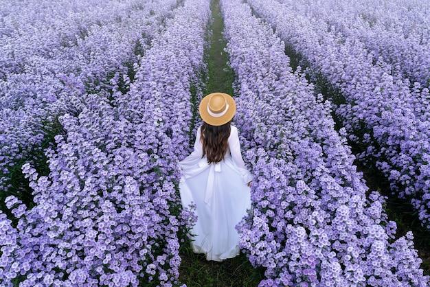 Schönes mädchen im weißen kleid, das in margaret blumenfeldern, chiang mai in thailand geht