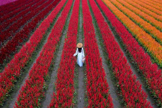 Schönes mädchen im weißen kleid reisen bei celosia blumenfeldern, chiang mai