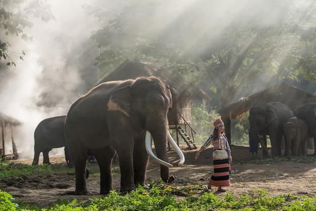 Schönes mädchen mit lächelndem elefanten, elefant thai, elefantendorf, chiang-mai, thailand