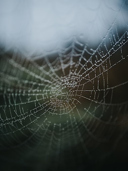 Schönes makrobild eines spinnennetzes in einem wald