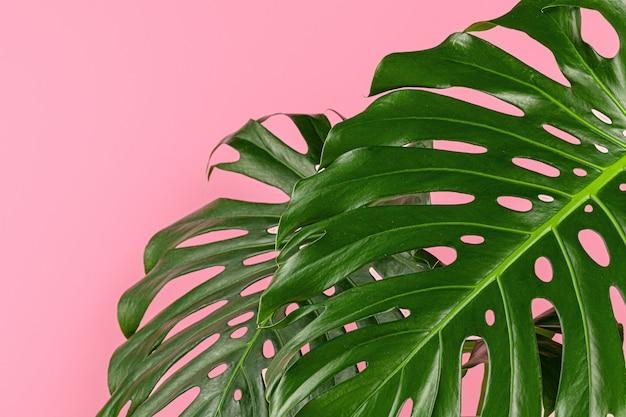 Schönes monstera-blatt auf einer rosa oberfläche