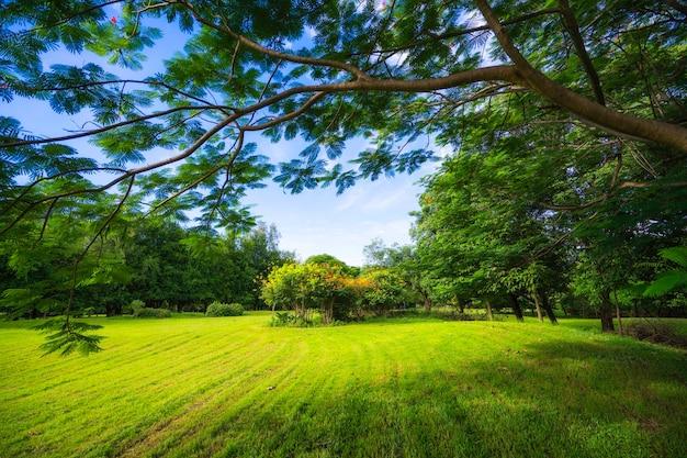 Schönes morgenlicht und blauer himmel im öffentlichen park mit grüner wiese.