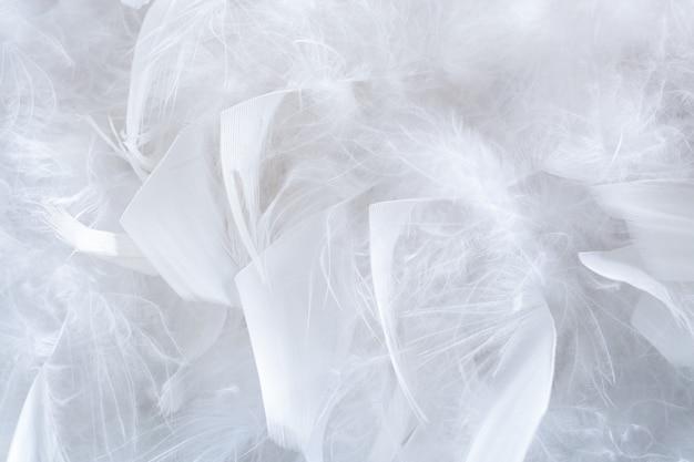 Schönes natürliches muster der nahaufnahme von großen und kleinen weißen organischen strukturierten leichten federn.