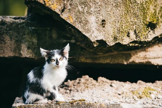Schönes neugeborenes obdachloses armes kätzchen, das unter stadtbrücke sitzt und nach haus, nahrung und besitzer sucht. ungesunde flohkatze im freien, die sich umschaut. schwarzes weiß geflecktes haustier. hungriges einsames linkes tier.