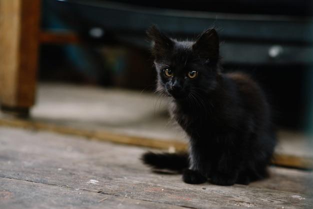 Schönes obdachloses flauschiges kätzchen der schwarzen farbe.