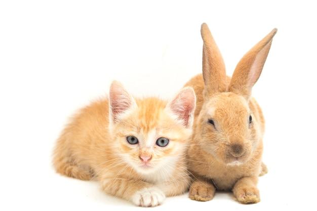 Schönes orange kätzchen und braunes kaninchen isoliert