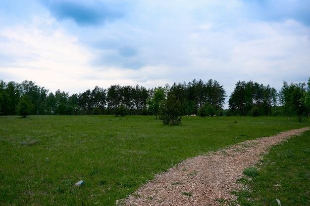 Schönes panorama des grünen stadtparks im morgengrauen. grüner waldsommer landschaft und blauer himmel.