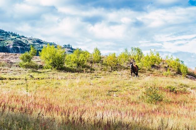 Schönes pferd auf einem grünen hügel mit einem bewölkten himmel