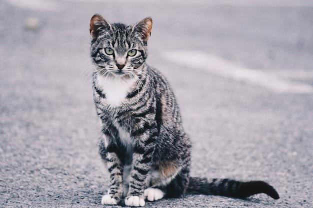Schönes porträt einer katze auf der straße. freie seite für text