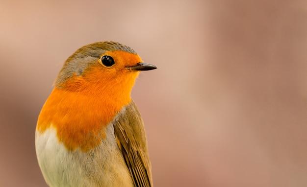 Schönes profil eines roten vogels, der die seite betrachtet