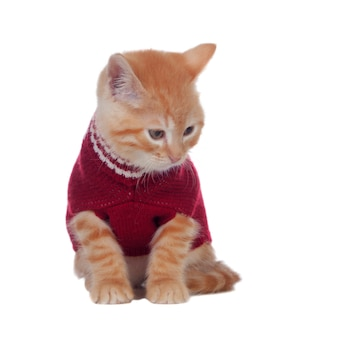 Schönes red-haired kätzchen, das eine wollstrickjacke trägt