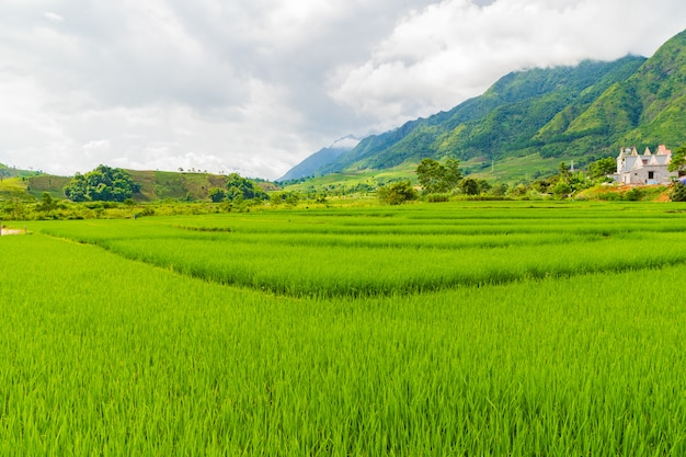 Schönes reisfeld und berglandschaft in sapa mu cang chai vietnam