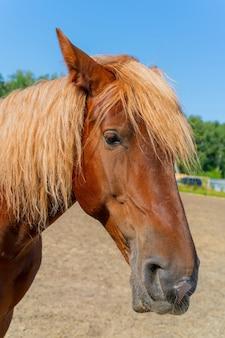Schönes rotes pferd.