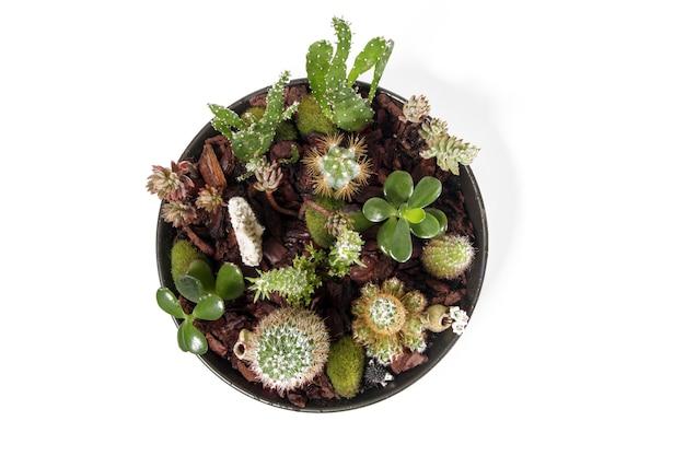 Schönes saftiges terrarium