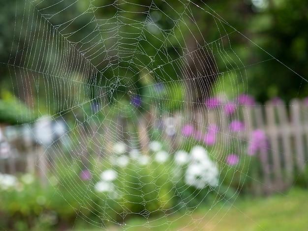 Schönes spinnennetz mit wassertropfen nahaufnahme. im hintergrund eine verschwommene sommerlandschaft
