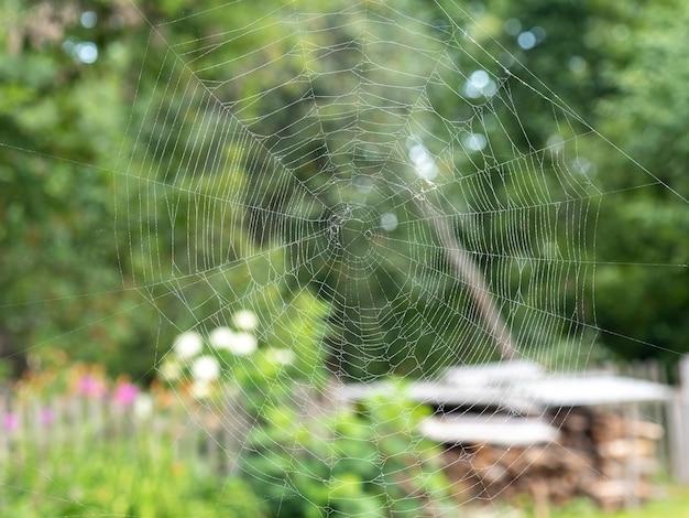 Schönes spinnennetz mit wassertropfen nahaufnahme. verschwommene sommerlandschaft