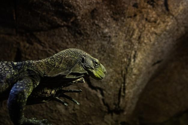 Schönes statisches reptil