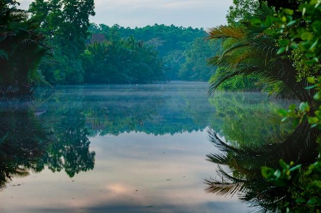 Schönes szenisches der mangrovenökologie in küsten auf ostthailand