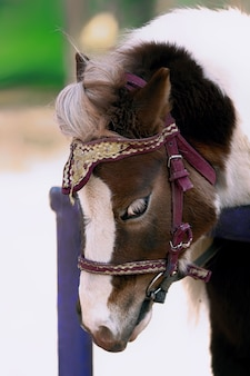 Schönes trauriges pony steht auf der straße