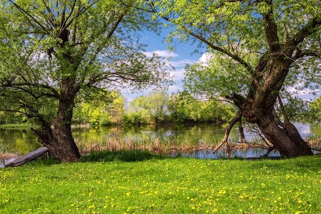 Schönes ufer des frühlingsflusses während des tages, blauer himmel, grünes gras, blühende bäume