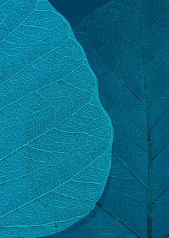 Schönes und detailliertes makroblatt
