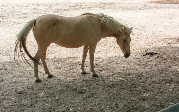 Schönes weibliches pferd
