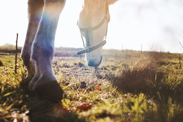 Schönes weißes pferd auf dem gras an einem sonnigen tag