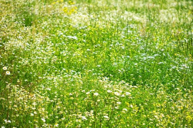 Schönes wiesenfeld mit wildblumen gegen berge mit wolken.