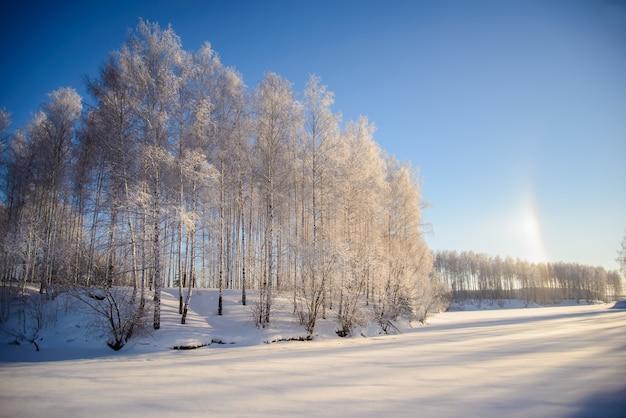 Schönes winterbild mit schneebedeckten bäumen bei sonnigem wetter