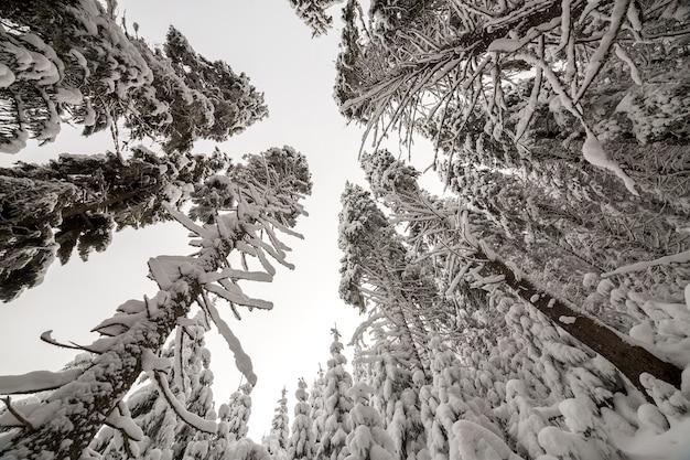 Schönes winterbild