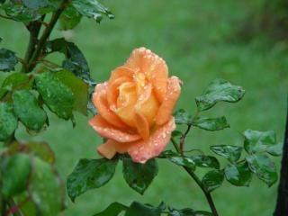 Schönheit einer blume, blüte