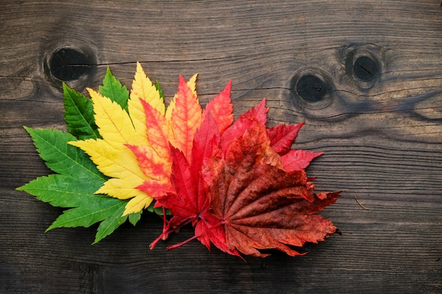 Schönheit in der natur oder im alterungskonzept. vielzahl farbe der ahornblätter