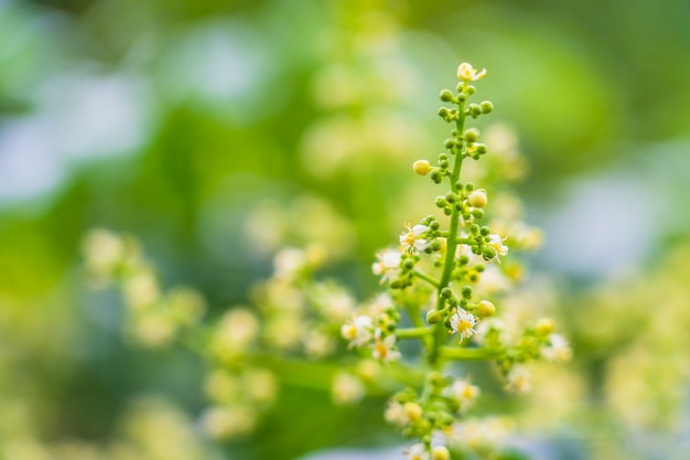 Schönheitsbedarfsblumen auf undeutlichem hintergrund mit raum für setzen den text